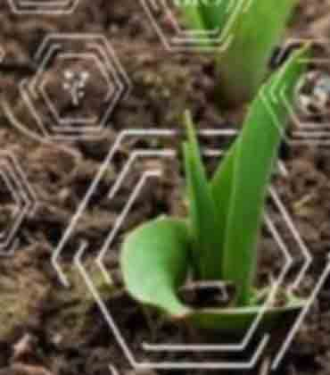 Is IoT the Future of Agriculture?