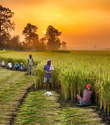 How AgTech Helps Farmer Co-Ops